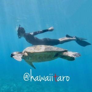 hawaiitaro