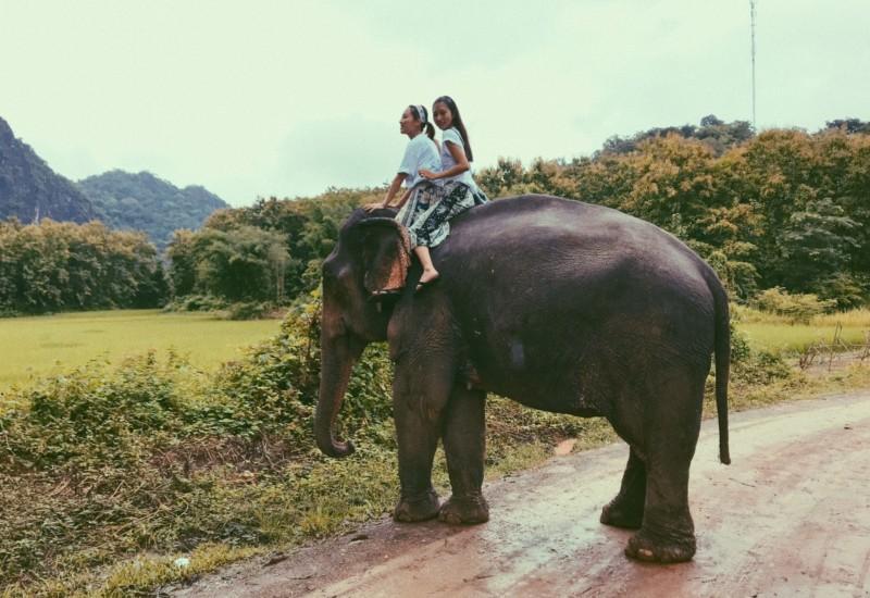 【ラオス】象使いの免許、取得への道