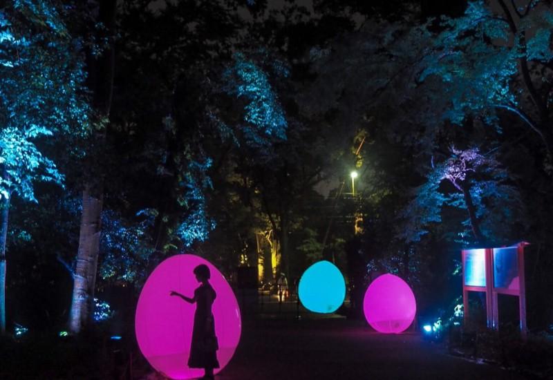 【京都】「下鴨神社 糺の森の光の祭り2019」で幻想的な夏の夜を