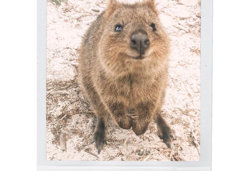 絶景ビーチ&世界一幸せな動物クオッカに会いに行こう♫ロットネスト島1day TRIP♡